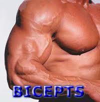 bicepts